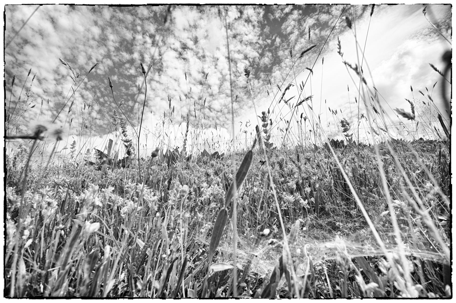 BW_Grass
