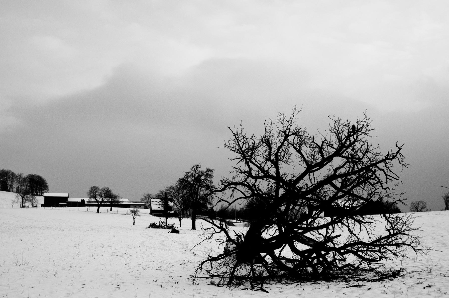 Land_Tree